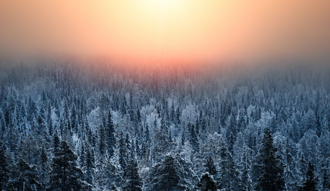 Sumuinen auringonnousu ja lumisia kuusia tunturin huipulta kuvattuna