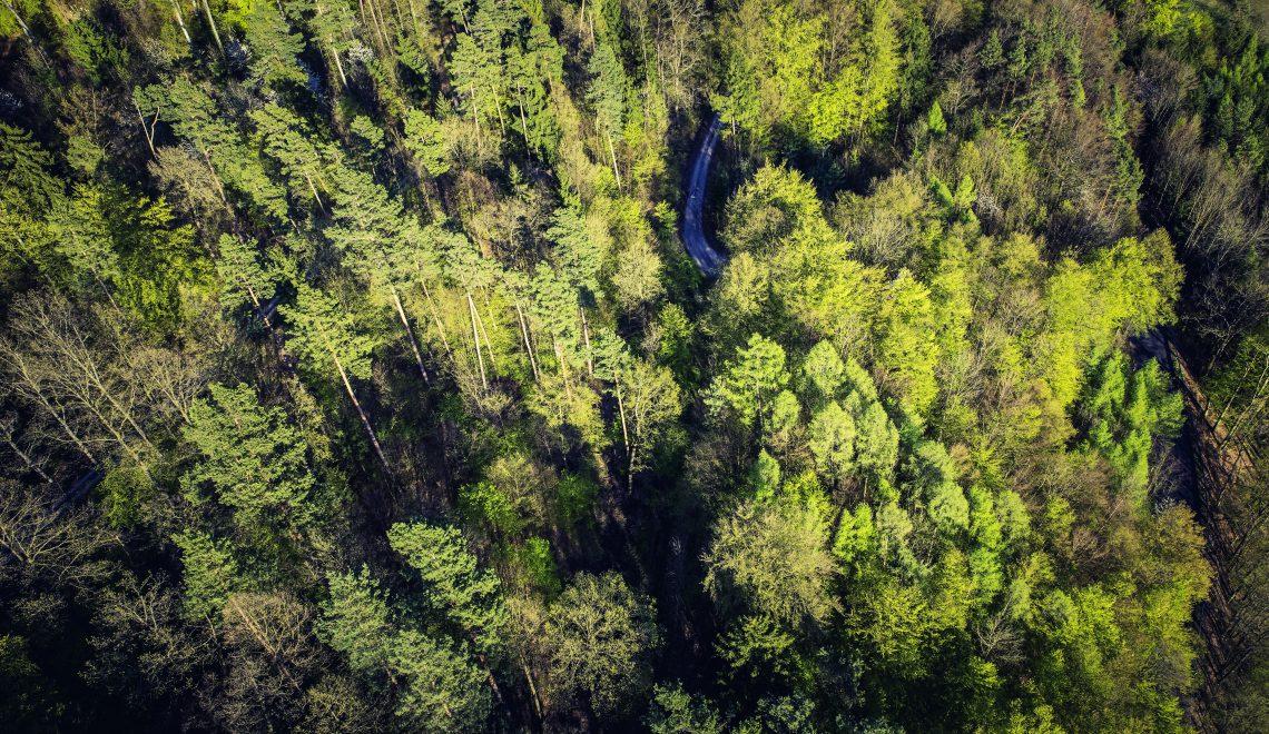 Lämpenevä ilmasto suosii metsätuholaisia