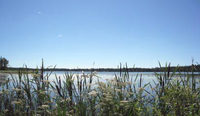Näkymä järvelle ja rantakaislikkoa