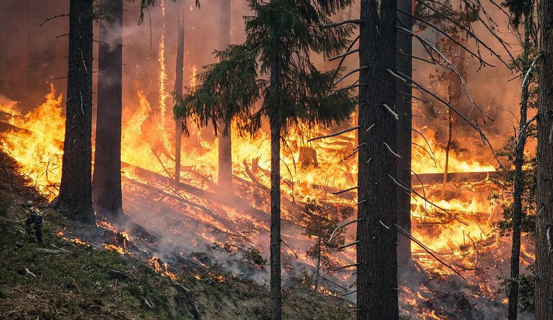 Metsäpalo roihuaa kuusikossa