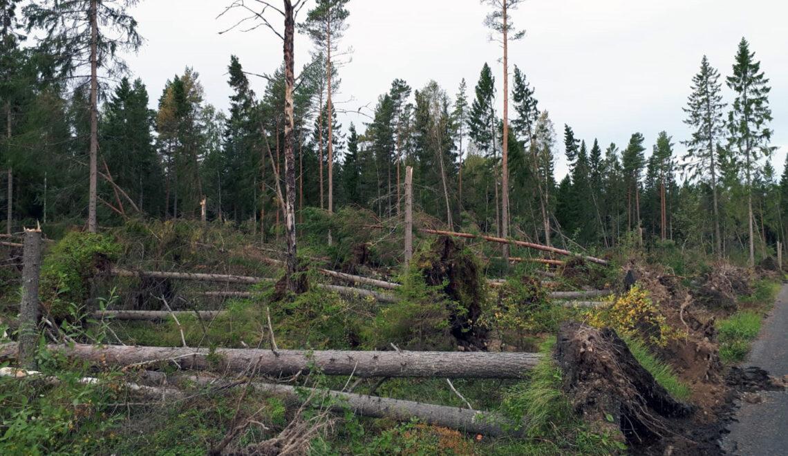 Aila-myrskyn aiheuttamia puustotuhoja