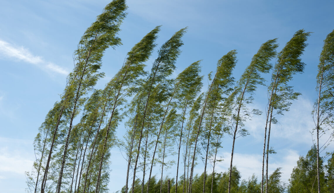 Windstorm Aila 2020: wind forecasts and discussion on climate change