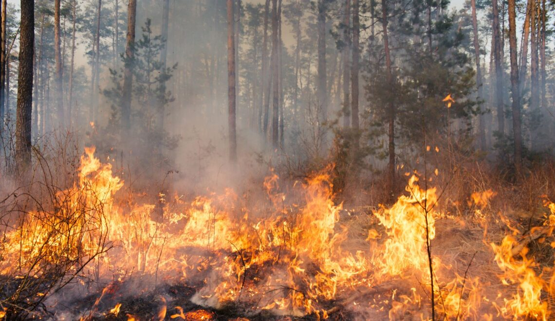 The exceptional Nordic forest fire season 2018 in the context of climate change